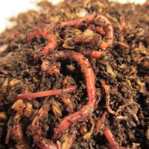 Multi-Gen Worm Mix